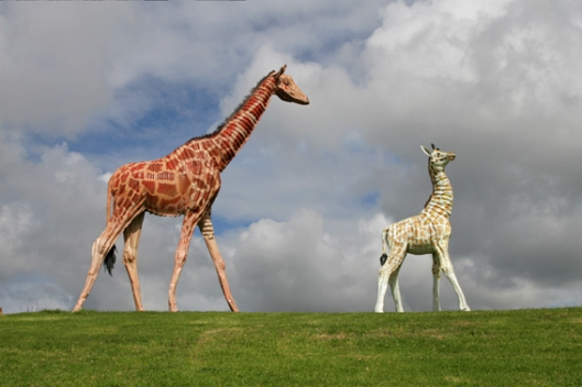 Image of life sized sculptures of two giraffes by Jeff Thomson