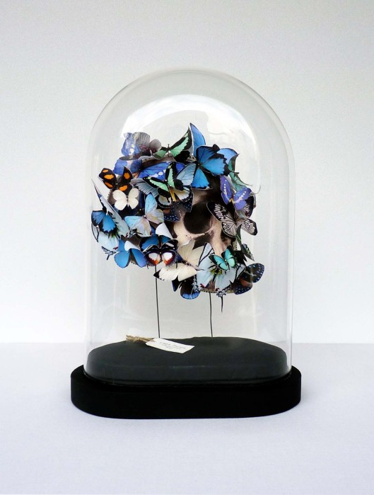 Image of Lyndie Dourthe's butterflies under a dome