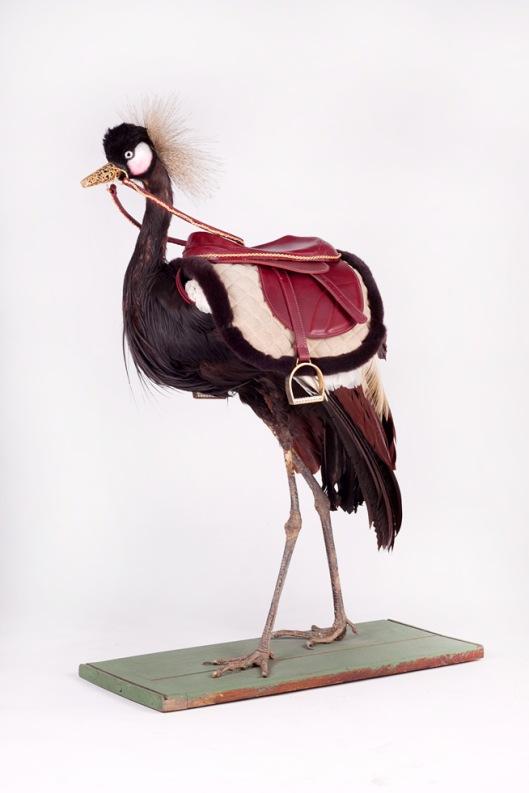 Kelly McCallum's 'Dutchess Anne Louise Chapman' taxidermy
