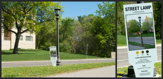 Urban Plant Tag: Street Lamp by the Carmichael Collective