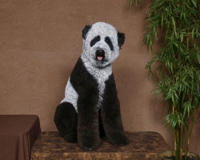 Panda by Ren Netherland