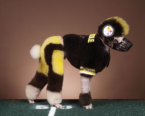 Pittsburgh Steeler by Ren Netherland