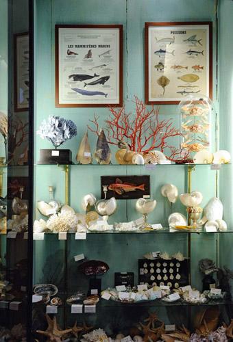 Le cabinet de curiosités - Deyrolle