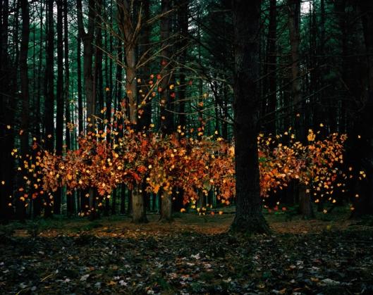 Leaves #1 by Thomas Jackson