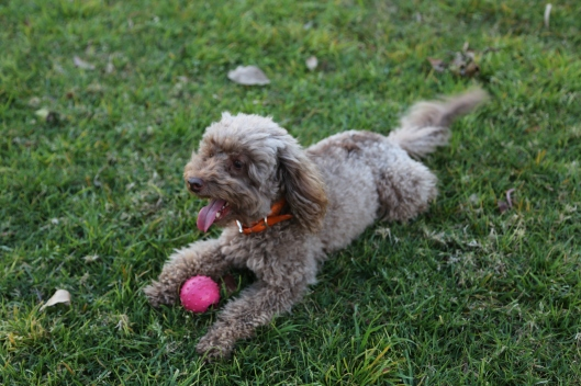 Bella & Her Ball