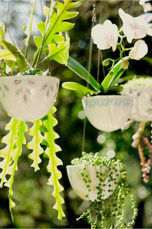 Hanging Garden by Angus & Celeste