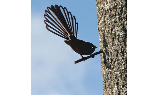 'Fantail (Piwakawaka)' Metal Bird by Phil Walters for Silo Design