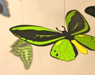 Native Australian Butterflies Hanging Mobile