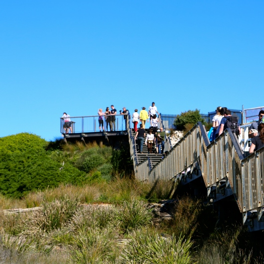 Part of the Bondi to Coogee Walkway (Image by LM for TSL)