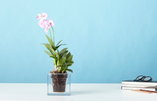 Boskke Cube with Orchid