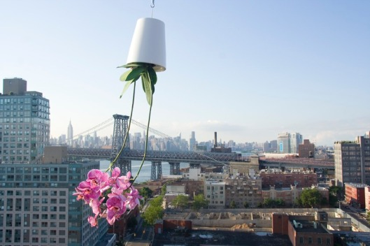The Boskke Skyplanter in Brooklyn