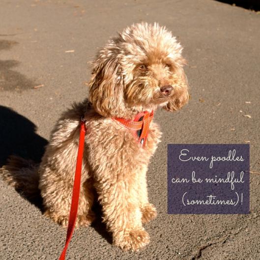 Mindful Poodle | TSL