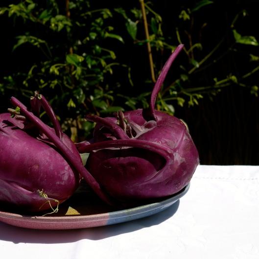 TSL Purple Kohlrabi